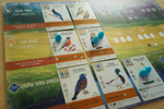 Bird-Themed Game Hatched In St. Louis Soars In Popularity | St. Louis Public Radio image
